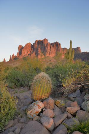USA, Arizona, Lost Dutchman State Park. Barrel Cactus and Superstition Mountains