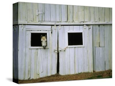 Horse Peering Through Barn Door