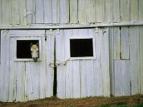 Horse Sticking Head out Barn Window-Kevin R^ Morris-Mounted Photographic Print