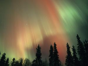 Aurora Borealis, Fairbanks Area, Alaska, USA by Kevin Schafer
