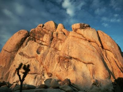 Joshua Tree and Cliffs by Kevin Schafer