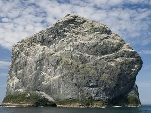 Northern gannet nesting colony atop Stac Lee by Kevin Schafer