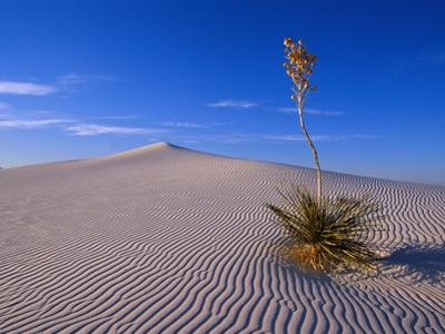 Yucca and Dunes, White Sands National Monument by Kevin Schafer