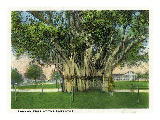 Key West, Florida - Barracks Banyan Tree Scene-Lantern Press-Art Print