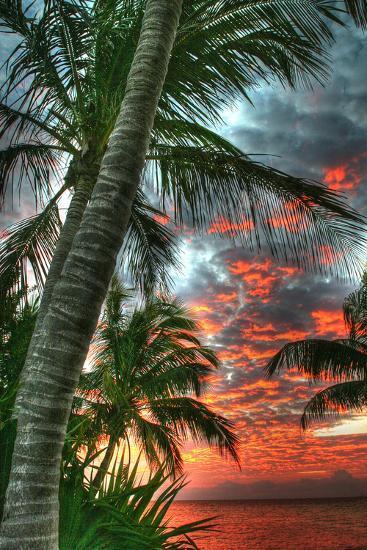 Key West Palm Sunrise Vertical-Robert Goldwitz-Photographic Print