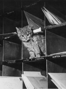 Pussy Cat Post by Keystone