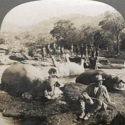 Result of a Morning's Hippopotamus Hunt on Mlembo River, Rhodesia, Africa, 1910
