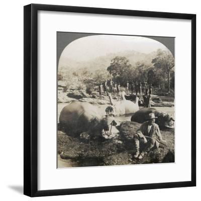 Result of a Morning's Hippopotamus Hunt on Mlembo River, Rhodesia, Africa, 1910