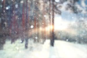 Blurred Background Forest Snow Winter by Kichigin