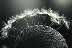 Dandelion Seeds Macro by Kichigin