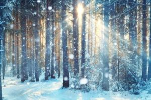 Frosty Winter Landscape in Snowy Forest by Kichigin