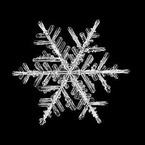 Snowflake Isolated on a Black Background Natural by Kichigin