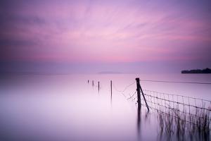 Milky Pink by Kieran O Mahony
