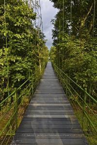 A Boardwalk Leads Through the Rain Forest at Costa Rica's La Selva Biological Station by Kike Calvo