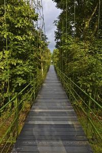 A Boardwalk Leads Through the Rain Forest at Costa Rica's La Selva Biological Station by Kike Calvo