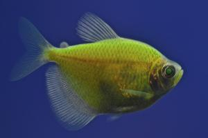 A Fluorescent Yellow Fish by Kike Calvo