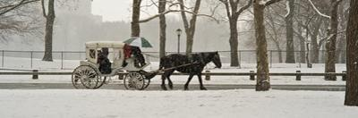 A Horse a Carriage in Central Park During a Blizzard by Kike Calvo