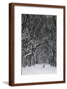 A Person under a Canopy of Snow Laden Trees in Central Park by Kike Calvo