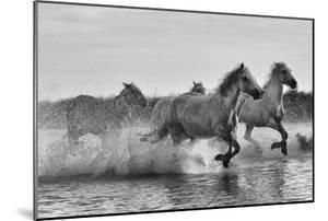 Camargue horses gallop through water. by Kike Calvo
