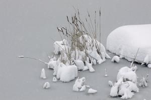 Cattails and Snow on a Frozen Pond by Kike Calvo