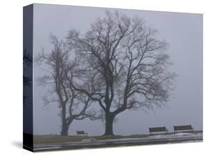 Fog on Savin Rock Trail in West Haven, Connecticut by Kike Calvo