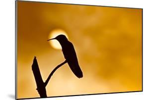 Silhouette of a hummingbird perched on a branch with the sun on the background. by Kike Calvo