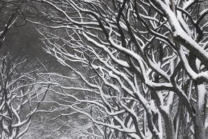 Snow Laden Trees in Central Park by Kike Calvo