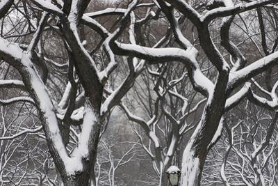 Snow Laden Trees in Central Park by Kike Calvo