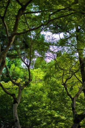 Trees in the Forest at Kiyomizu-Dera Temple by Kike Calvo
