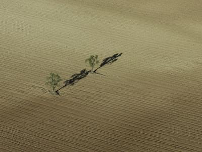 Two Lone Trees Casting Shadows in the Middle of a Plowed Field by Kike Calvo