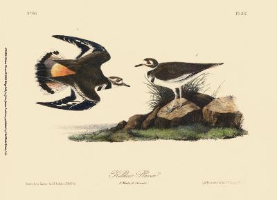 Kildeer Plover-John James Audubon-Art Print