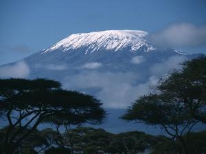Kilimanjaro and Acacia Trees