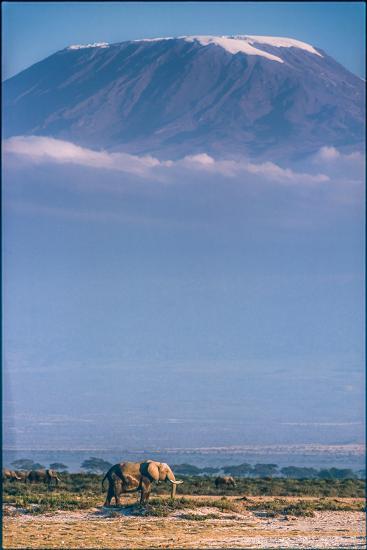 Kilimanjaro and the Quiet Sentinels-Jeffrey C. Sink-Photographic Print
