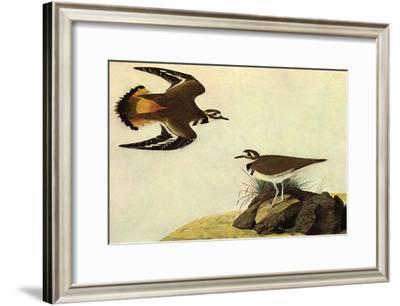 Killdeer-John James Audubon-Framed Art Print