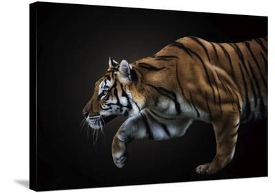 Killing Me Softly-Pedro Jarque-Stretched Canvas Print