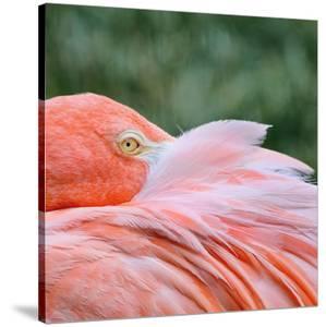Pink Flamingo by Kim Hojnacki