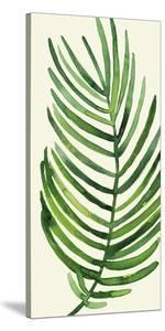 Tropical Palm Leaf IV by Kim Johnson