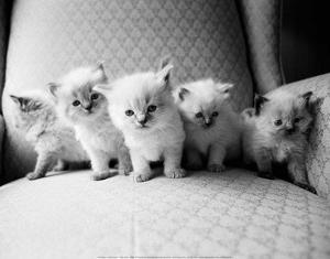 Five Kittens by Kim Levin