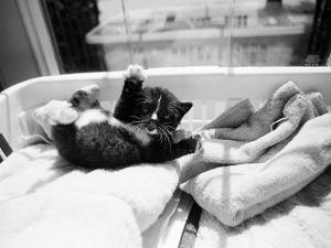 Kitten Laundry by Kim Levin