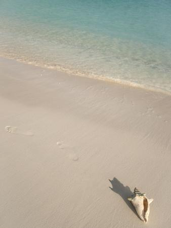 Conch Shell on Grace Bay Beach, Providenciales, Turks and Caicos Islands, West Indies, Caribbean