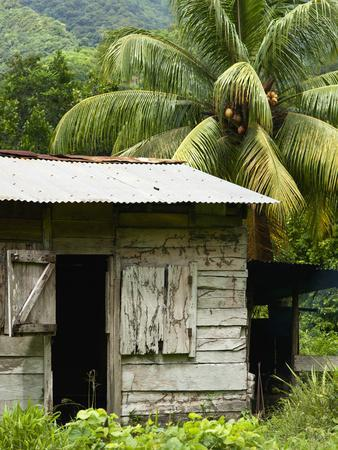 Farmer's Home on a Pineapple Farm, White River, Delices, Dominica, Windward Islands, West Indies, C