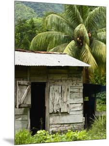 Farmer's Home on a Pineapple Farm, White River, Delices, Dominica, Windward Islands, West Indies, C by Kim Walker