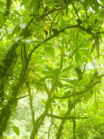Rainforest Habitat at Trafalgar Falls, Morne Trois Pitons National Park, UNESCO World Heritage Site