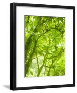 Rainforest Habitat at Trafalgar Falls, Morne Trois Pitons National Park, UNESCO World Heritage Site by Kim Walker