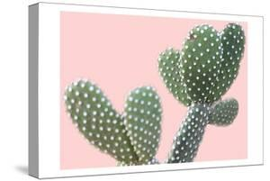 Blush Cactus 1 v2 by Kimberly Allen