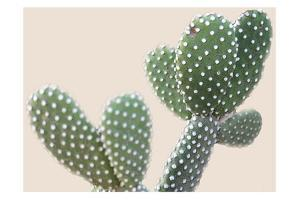 Blush Cactus 1 by Kimberly Allen