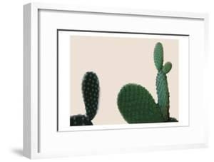 Blush Cactus 2 by Kimberly Allen