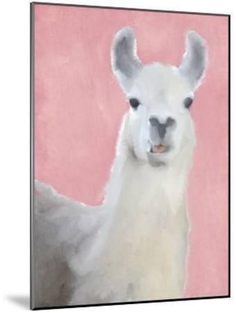 Llama on Pink by Kimberly Allen
