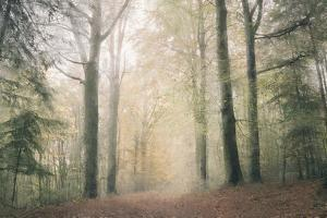 Morning Walk by Kimberly Allen