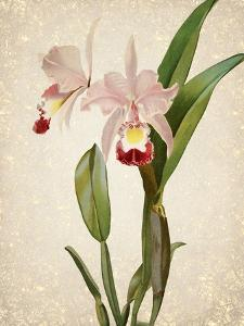 Orchids 2 by Kimberly Allen